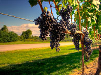 dc wine tours